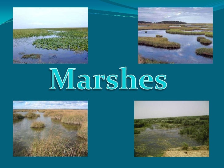 Marshes<br />
