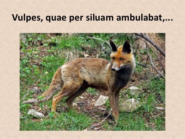 Vulpes, quae per siluam ambulabat,...