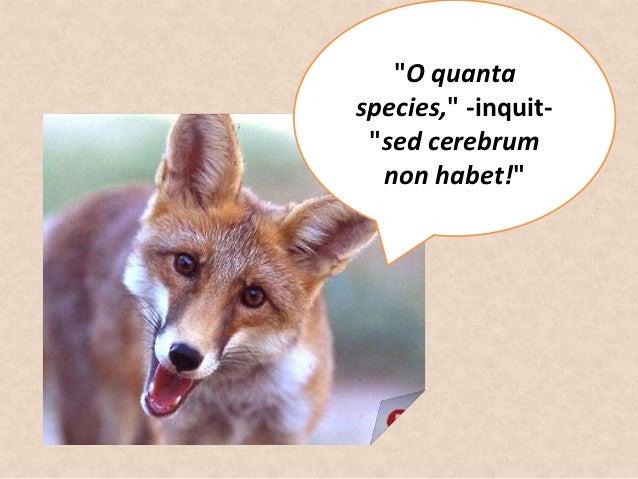 """""""O quantaspecies,"""" -inquit- """"sed cerebrum  non habet!"""""""