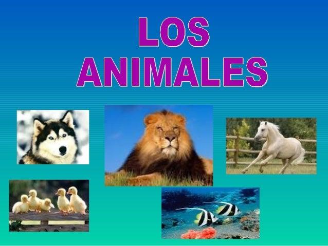ÍNDICE•   ESPONJAS, CELENTÉREOS Y EQUINODER•   GUSANOS Y MOLUSCOS•   ARTRÓPODOS•   VERTEBRADOS•   PECES•   ANFIBIOS Y REPT...