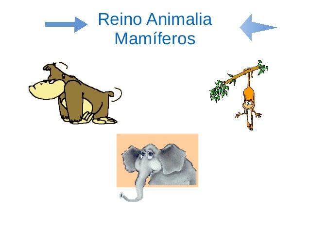 Reino Animalia Mamíferos