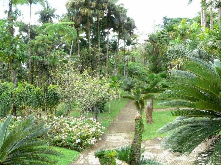 Le jardin de Balata à Fort de France Slide 3