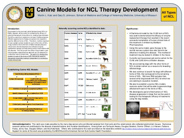 All Types of NCL Canine Models for NCL Therapy Development Martin L. Katz and Gary S. Johnson, School of Medicine and Coll...