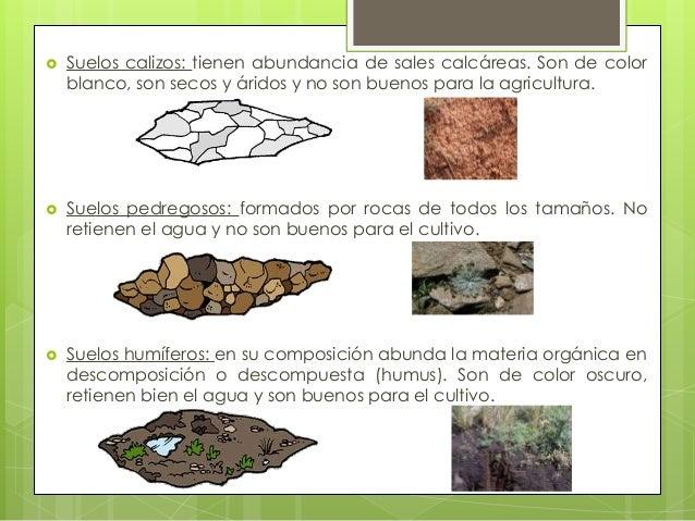 Suelos y plantas - Tipos de suelos para pisos ...