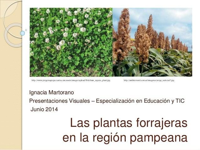 Las plantas forrajeras en la región pampeana Ignacia Martorano Presentaciones Visuales – Especialización en Educación y TI...