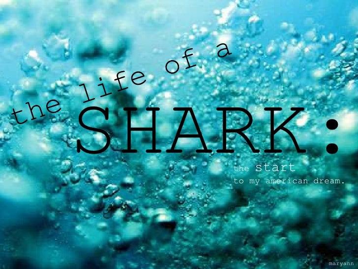 SHARK:   the start   to my american dream.                    maryann