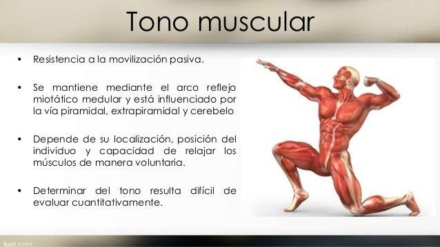 Masa y fuerza muscular