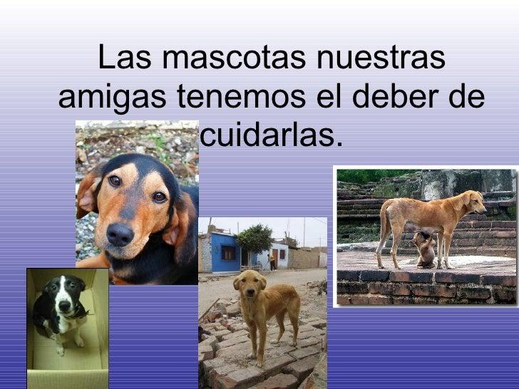 Las mascotas nuestras amigas tenemos el deber de cuidarlas.