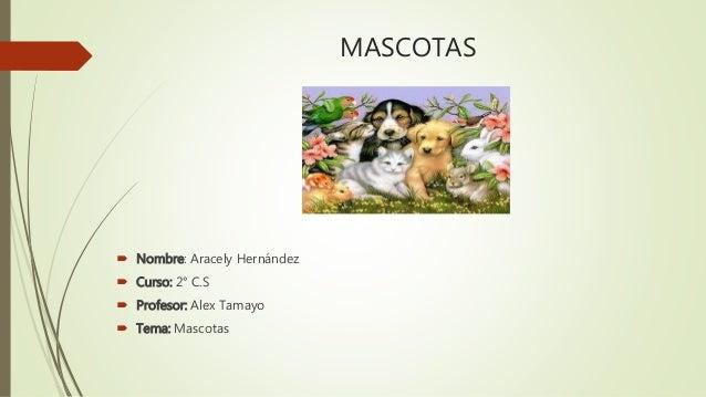 MASCOTAS  Nombre: Aracely Hernández  Curso: 2° C.S  Profesor: Alex Tamayo  Tema: Mascotas