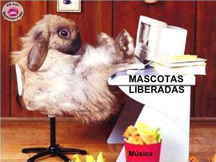 MASCOTAS LIBERADAS Música