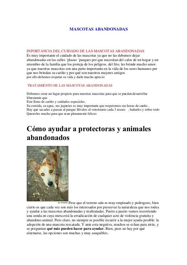 MASCOTAS ABANDONADAS INPORTANCIA DEL CUIDADO DE LAS MASCOTAS ABANDONADAS Es muy importante el cuidado de las mascotas ya q...