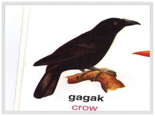 malikhaing pagpapahayag Retorika has 286 ratings and 19 reviews: published 2011 by rajah publishing house, 271 pages, paperback.