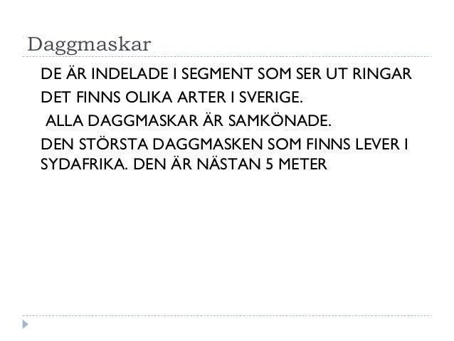 Daggmaskar DE ÄR INDELADE I SEGMENT SOM SER UT RINGAR DET FINNS OLIKA ARTER I SVERIGE. ALLA DAGGMASKAR ÄR SAMKÖNADE. DEN S...