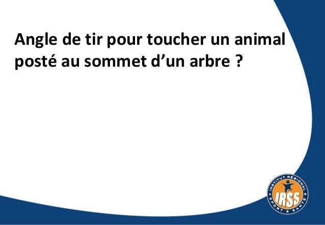 Angle de tir pour toucher un animal posté au somment d'un arbre ? Slide 2