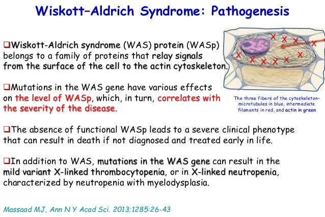 format 2016 masqueradesyndromes in allergicdiseases