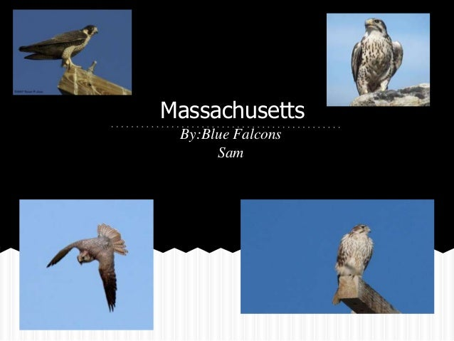 Massachusetts By:Blue Falcons      Sam