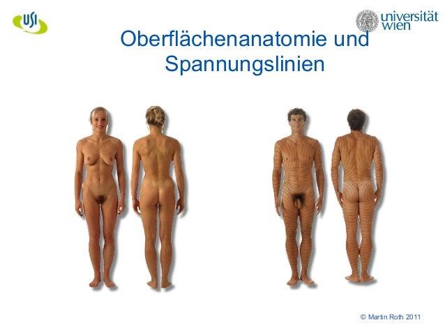 Fantastisch Oberflächenanatomie Des Gesichtes Galerie - Anatomie Von ...