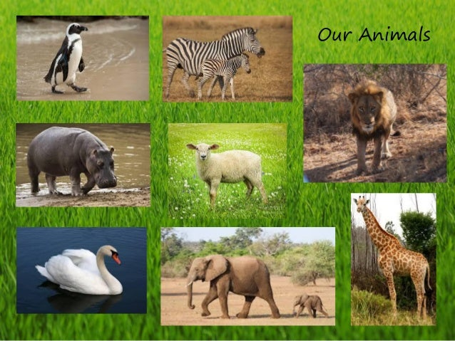 Our Animals