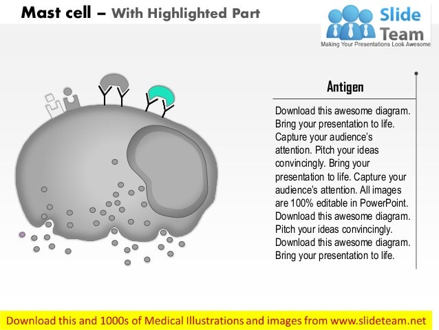 Mast cell medical images for power point