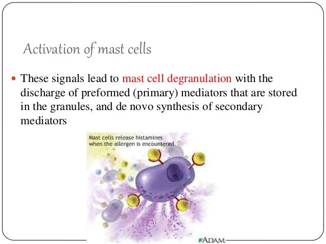Mast cells in health and disease final dr karishma