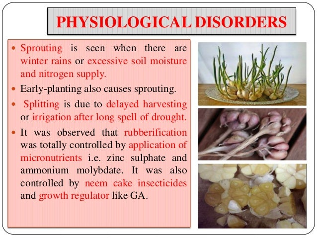 physiological disorders in vegetables crops pdf