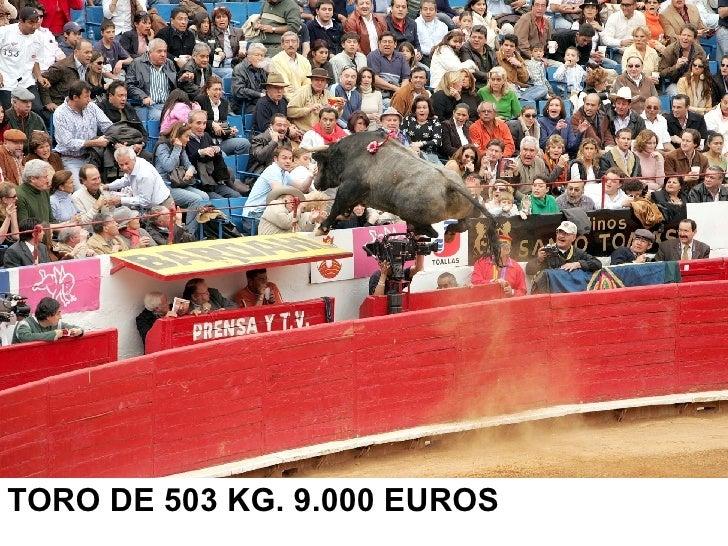 <ul><li>TORO DE 503 KG. 9.000 EUROS </li></ul>