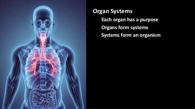 Organ Systems Each organ has a purpose Organs form systems Systems form an organism