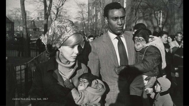 Central Park Zoo, New York, 1967