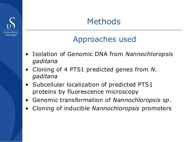 Gene Cloning, PCR cloning, and Subcloning Services