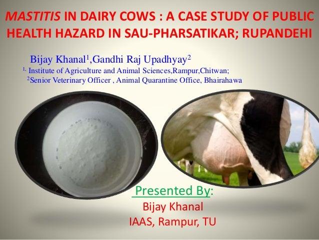 MASTITIS IN DAIRY COWS : A CASE STUDY OF PUBLIC HEALTH HAZARD IN SAU-PHARSATIKAR; RUPANDEHI Presented By: Bijay Khanal IAA...