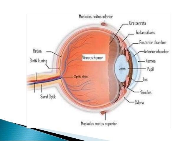 histologi mata (modul organ sensoris)