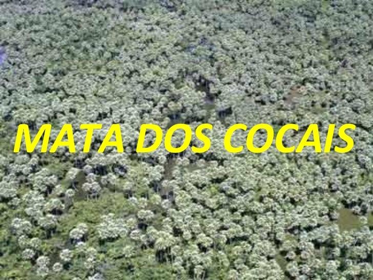 MATA DOS COCAIS