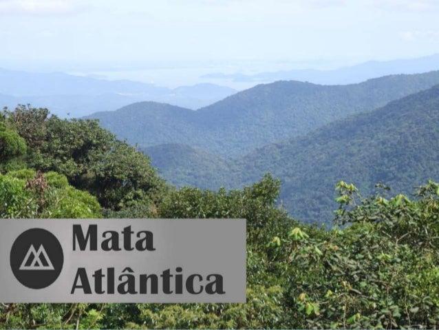 A Mata Atlântica é um bioma de floresta tropical que abrange a costa leste, sudeste e sul do Brasil, leste do Paraguai e a...