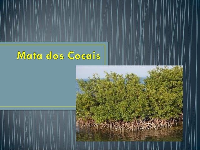 • Amata dos cocaisé uma formação vegetal típica da área de transição entre aregião nortee nordestebrasileira e que o...