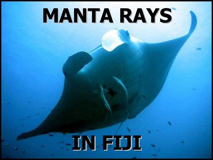 MANTA RAYS IN FIJI