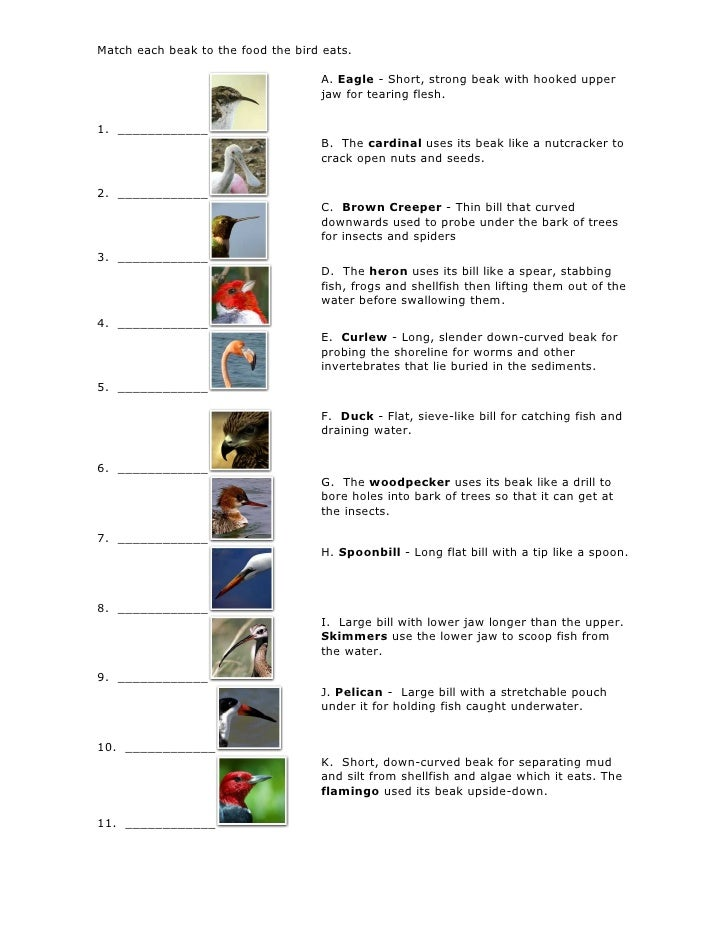 Match Each Beak To The Food The Bird Eats Exercise