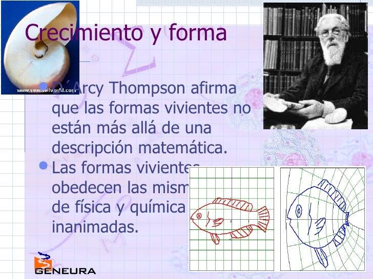 Crecimiento y forma <ul><li>D´Arcy Thompson afirma que las formas vivientes no están más allá de una descripción matemátic...
