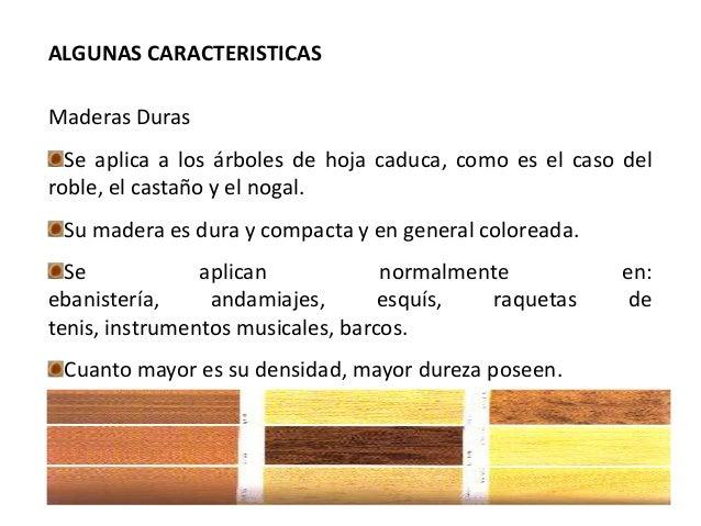 Material madera for Diferencia entre arboles de hoja caduca y hoja perenne