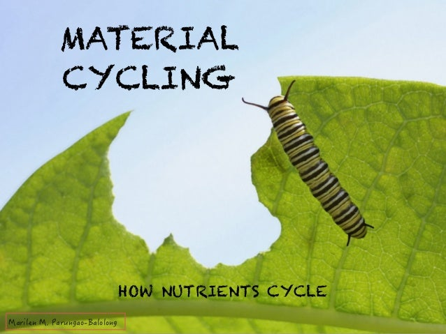 MATERIAL  CYCLING  HOW NUTRIENTS CYCLE  /CTKNGP/2CTWPICQ$CNQNQPI