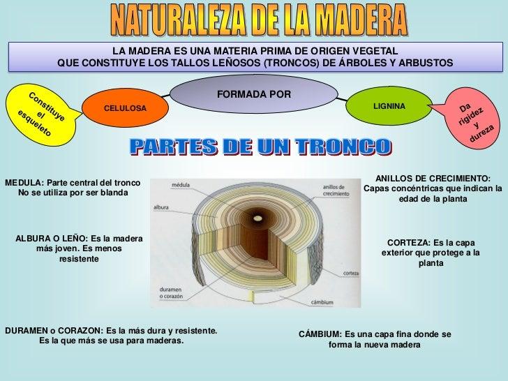 LA MADERA ES UNA MATERIA PRIMA DE ORIGEN VEGETAL            QUE CONSTITUYE LOS TALLOS LEÑOSOS (TRONCOS) DE ÁRBOLES Y ARBUS...