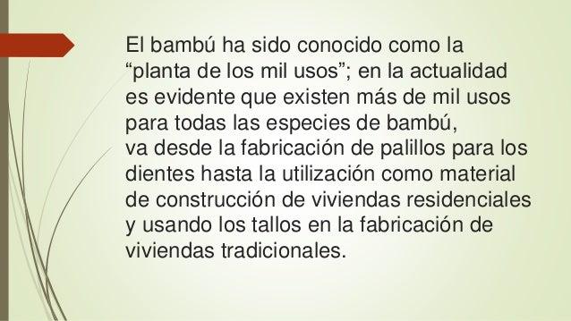 """El bambú ha sido conocido como la  """"planta de los mil usos""""; en la actualidad  es evidente que existen más de mil usos  pa..."""