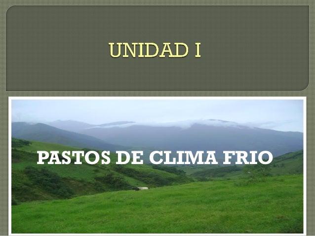 PASTOS DE CLIMA FRIO