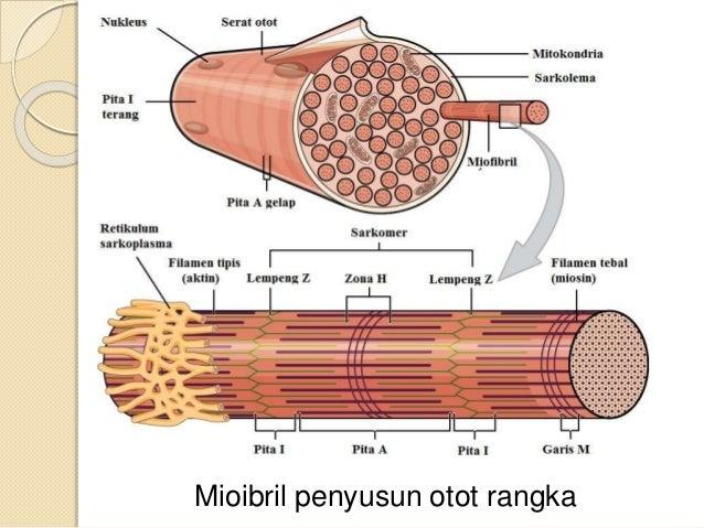 proteini kreatini steroidi