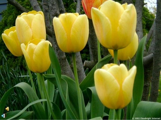 Bukti Ke-Maha Besar-an Allah…Sumber : www.dudung.net