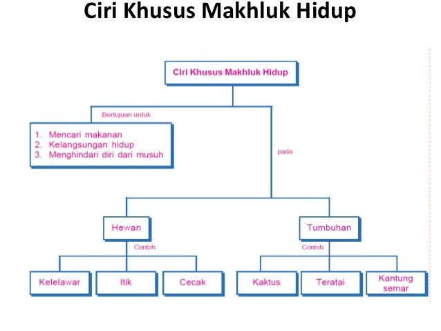 Materi Ipa Kelas Vi