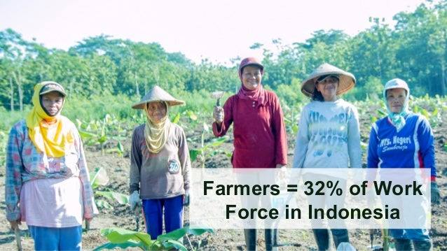 Pertanian Hidroponik Di Indonesia