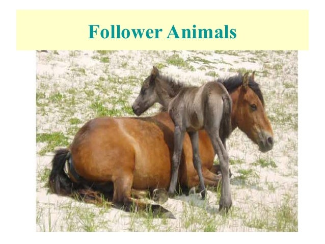 maternal behaviour in sheep List of abnormal behaviours in animals abnormal behaviour in animals can be infanticide may be a normal behaviour and regularly observed in one species.