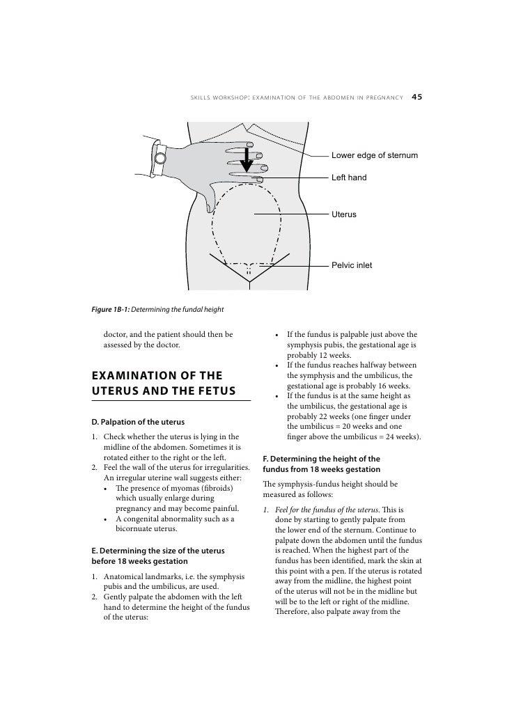 maternal care skills workshop examination of the abdomen