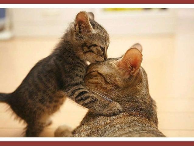 Maternal love (母 愛)