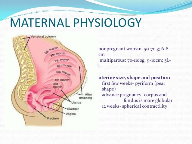 Maternal physiology, prenatal care,normal labor and delivery